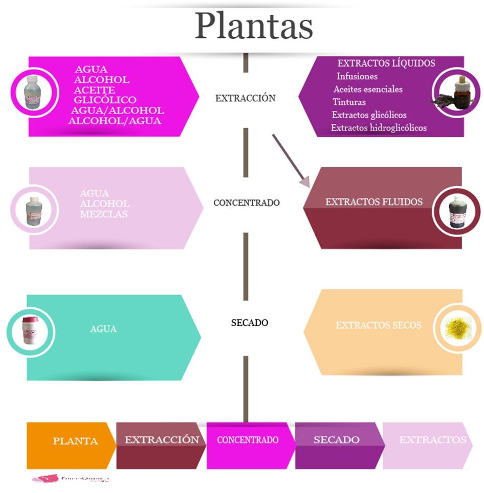 extractos -secos-glicólicos- fluidos